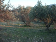 Parcel 1320 sq.m near the dam - Kos