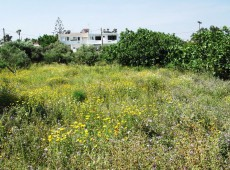 Plot for sale in Antimachia Kos.
