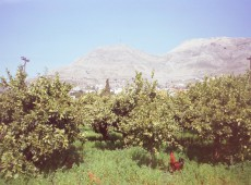 Land for sale in Kalymnos