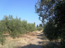 Land for sale in Marmaroto, Kos.