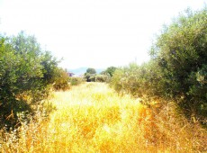 Land for sale in Platani, Kos.