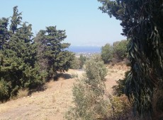 Land for sale in the area Asfendiou, Kos.